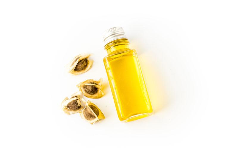 Moringa olejodajna