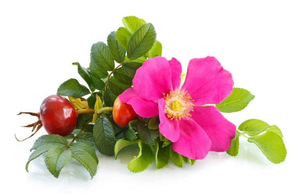 Ceremoniał granatowej róży